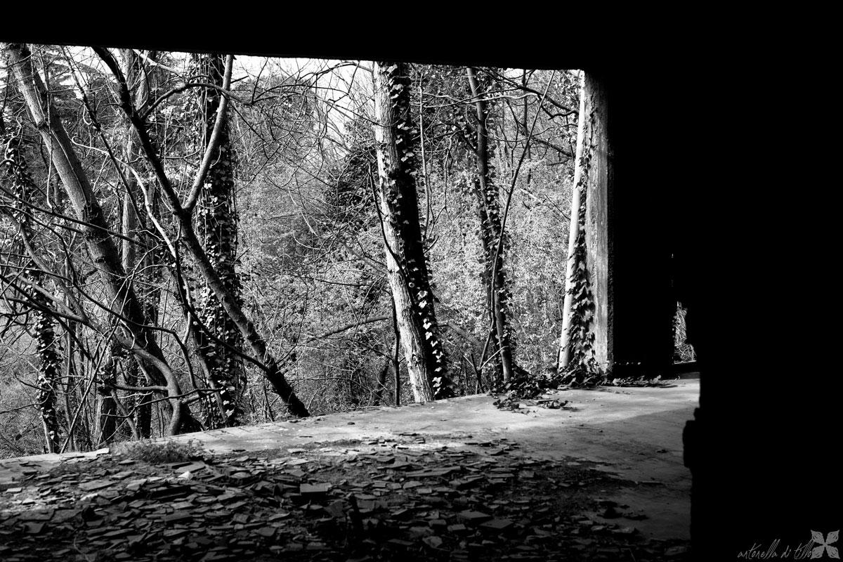 abbandono, fotografia, natura morta